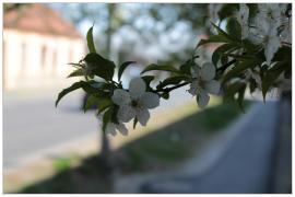 Pécs - tavasz