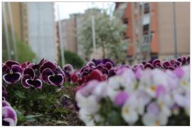 Pécs - kertváros